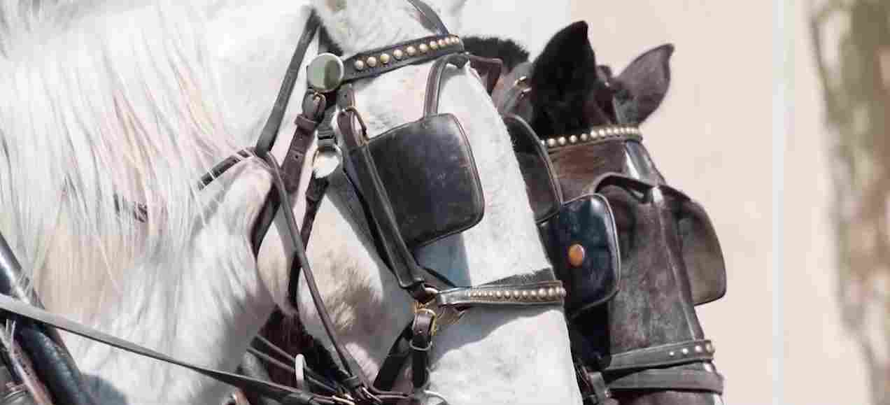 college rules requiring students to have blinders while taking their exams is similar to horses in blinders